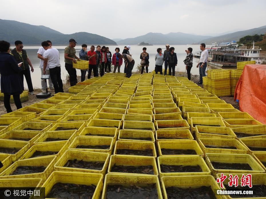 吉林百余市民众筹 买5500余斤活鱼放入松花湖