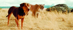 """《一条狗的回家路》""""跨物种情""""打动观众"""