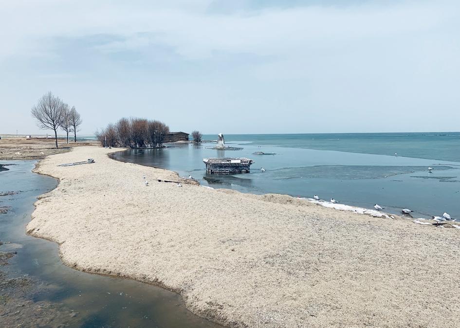 青海湖之春